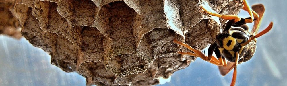 Why do wasps fly at us during summer?
