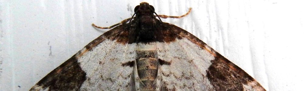 Found moths in your house