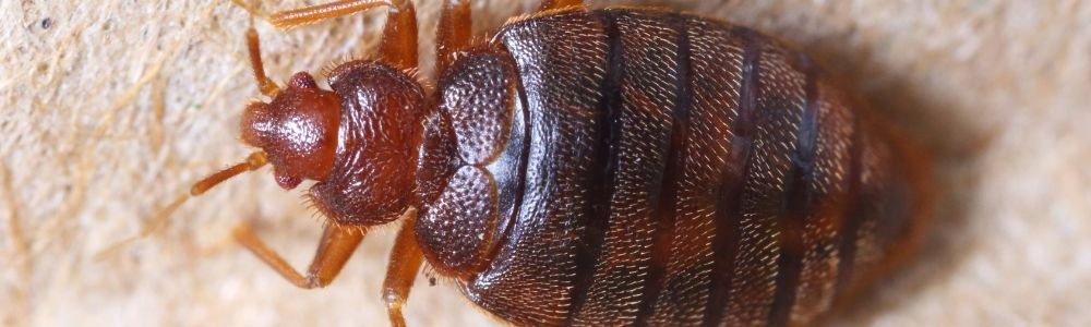 Found bed bugs in your house?