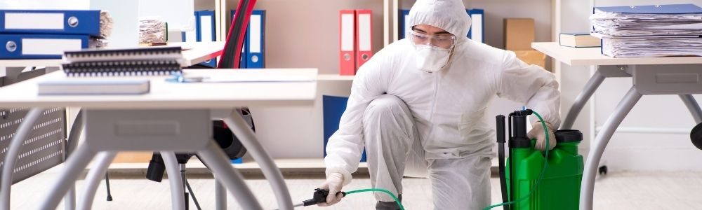 Pest control services for offices
