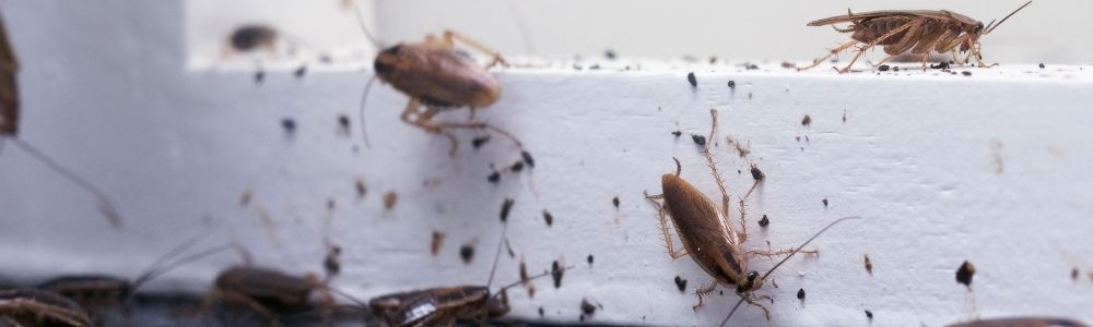 Affordable residential pest control