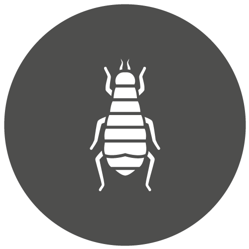 Leeds Pest Control